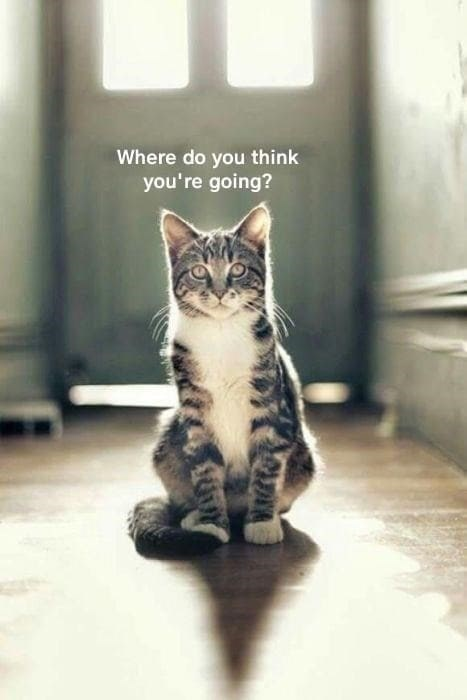Cat - Where do you think you're going?