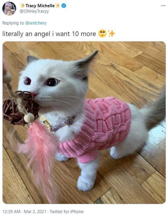Cat - Tracy Michelle @OhHeyTracyy ... Replying to @snitchery literally an angel i want 10 more 12:39 AM Mar 3, 2021 · Twitter for iPhone