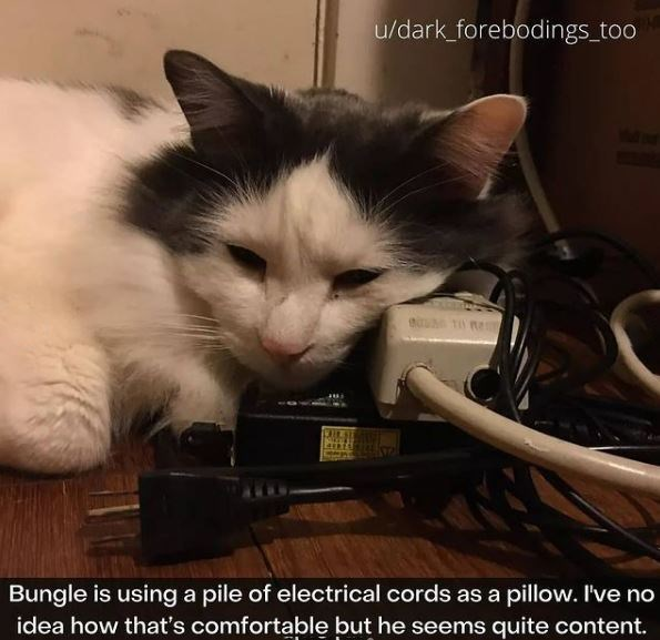 Cat - u/dark_forebodings_too Bungle is using a pile of electrical cords as a pillow. I've no idea how that's comfortable but he seems quite content.