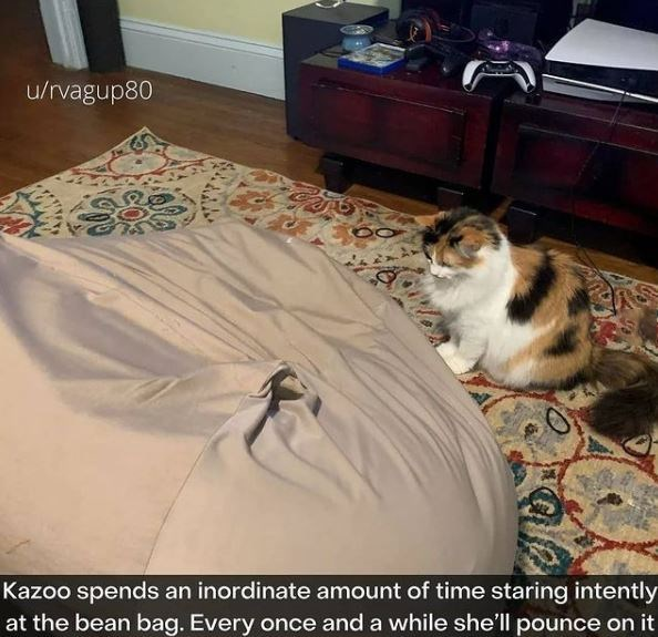 Cat - u/rvagup80 Kazoo spends an inordinate amount of time staring intently at the bean bag. Every once and a while she'll pounce on it