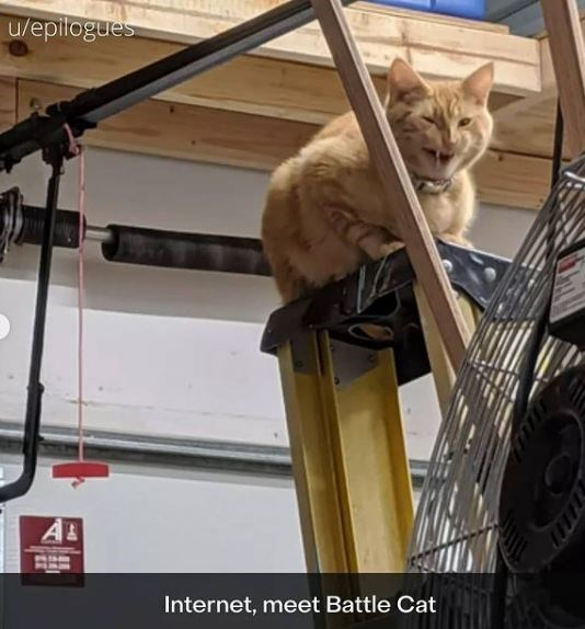 Cat - u/epilogues AL Internet, meet Battle Cat