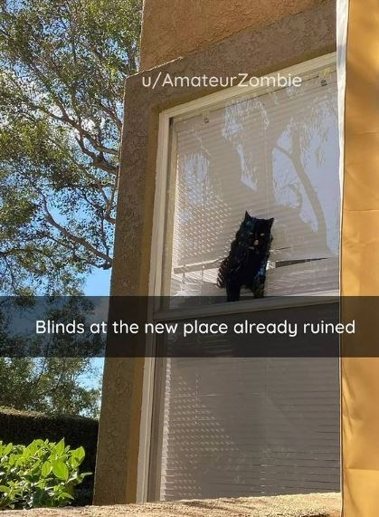 Tree - u/AmateurZombie Blinds at the new place already ruined