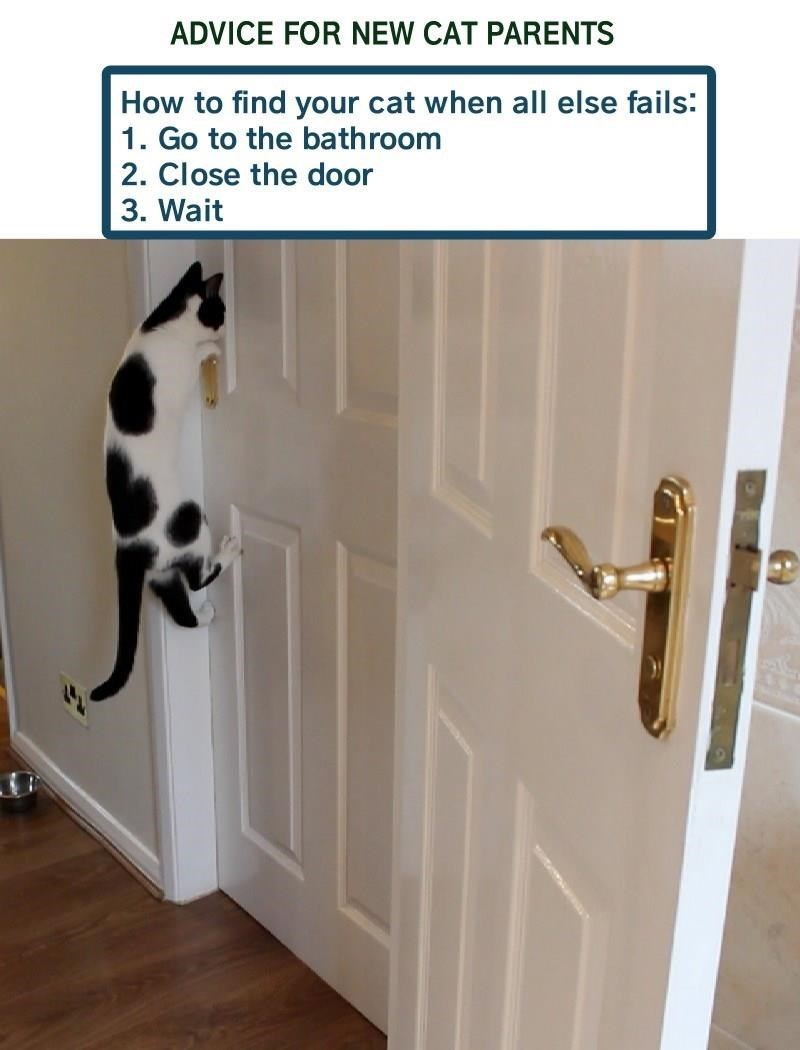 Door - ADVICE FOR NEW CAT PARENTS How to find your cat when all else fails: 1. Go to the bathroom 2. Close the door 3. Wait