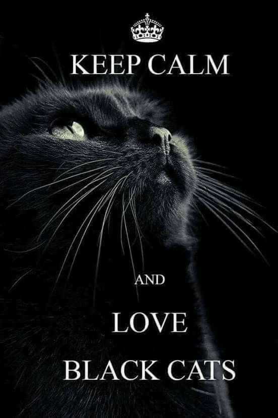 Carnivore - ΚΕΕP CALM AND LOVE BLACK CATS