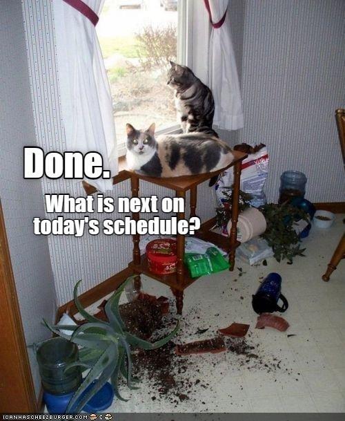 Cat - Done. What is next on today's schedule? ICANHASCHEEZBURGER.COM