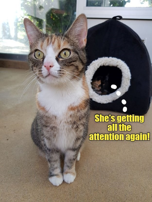 Cat - She's getting all the attention again!