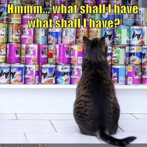 Cat - hisMas Hmmm.whatshall-I have, what shallI have? whiskas Winstn)ton kat kite iskas iteka iskas whish ekat felox iskas/ niskas (CANHASCHEEZEURGER.COM. G8.