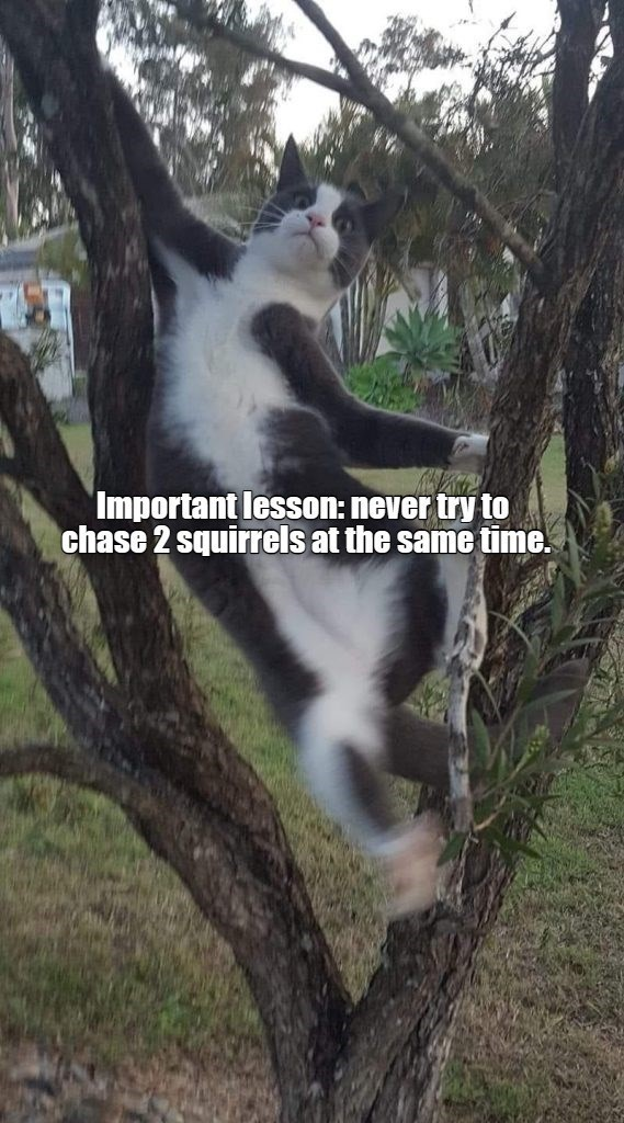 Head - i lesson: never try to port chase 2 squirrels at the same time.