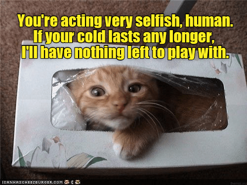 Cat - You're acting very selfish, human. If your cold lasts any longer, HI have nothing left to play with. ICANHASCHEEZE URGER.COM then