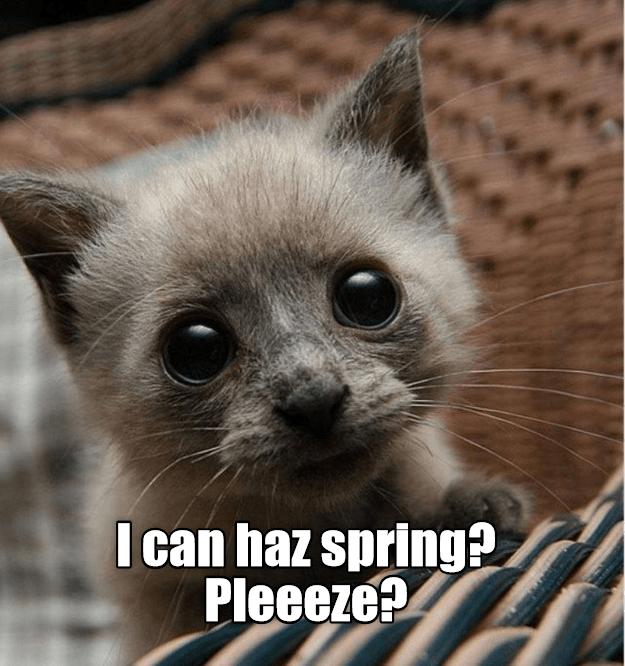 Cat - I can haz spring? Pleeeze?