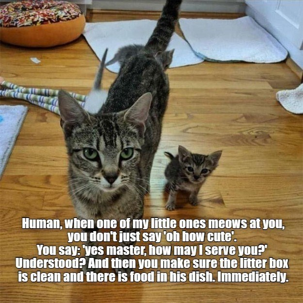 """Cat - Human, when one of my little ones meows at you, you don't just say 'oh how cute'. You say: yes master, how may I serve you?"""" Understood? And then you make sure the litter box is clean and there is food in his dish. Immediately."""