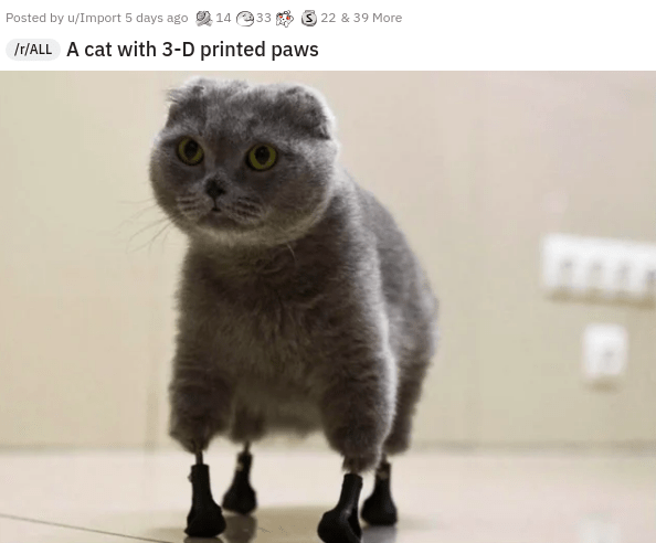 Head - Posted by u/Import 5 days ago 14 33 3 22 & 39 More Ir/ALL A cat with 3-D printed paws