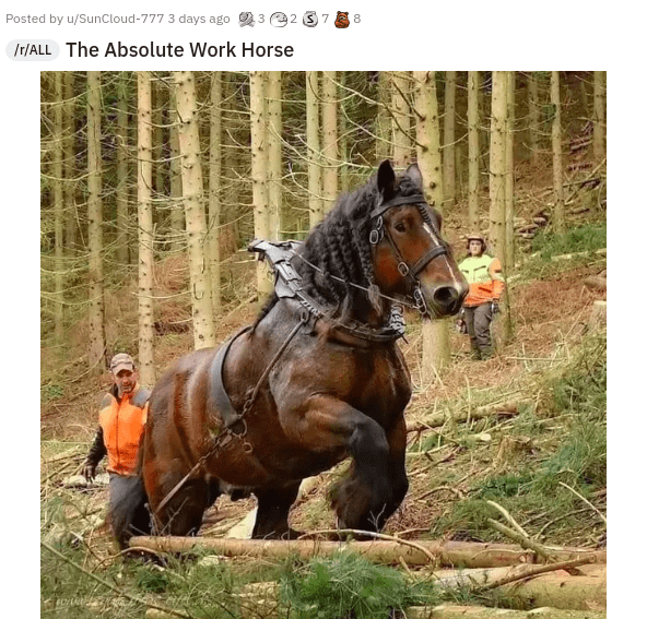 Horse - Posted by u/SunCloud-777 3 days ago 23 22 37 8 Ir/ALL The Absolute Work Horse