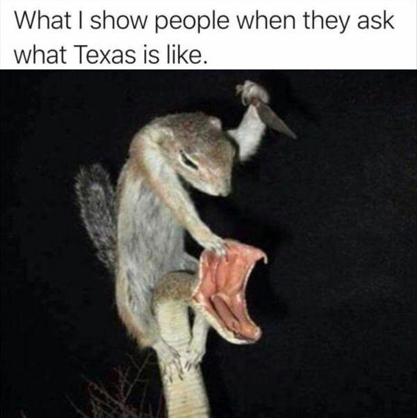 Plant - What I show people when they ask what Texas is like.