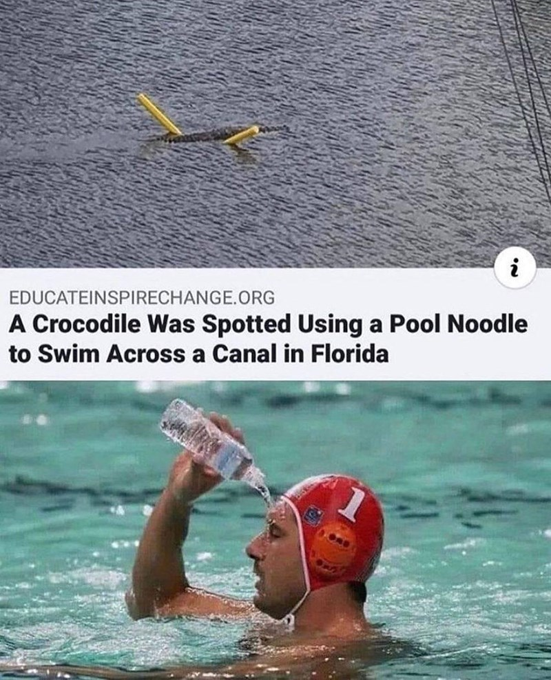 Water - i EDUCATEINSPIRECHANGE.ORG A Crocodile Was Spotted Using a Pool Noodle to Swim Across a Canal in Florida