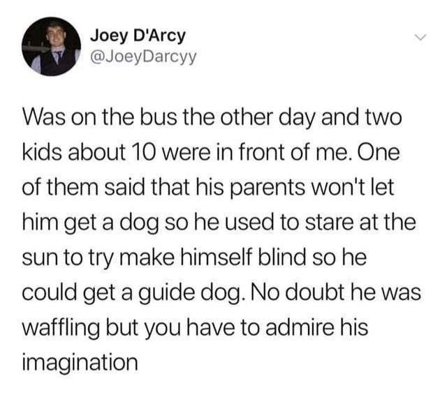 Font - Joey D'Arcy @JoeyDarcyy Was on the bus the other day and two kids about 10 were in front of me. One of them said that his parents won't let him get a dog so he used to stare at the sun to try make himself blind so he could get a guide dog. No doubt he was waffling but you have to admire his imagination