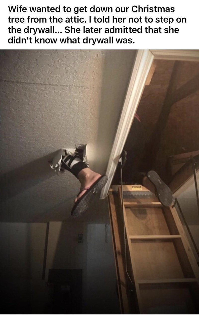 Human body - Wife wanted to get down our Christmas tree from the attic. I told her not to step on the drywall... She later admitted that she didn't know what drywall was. EUSO