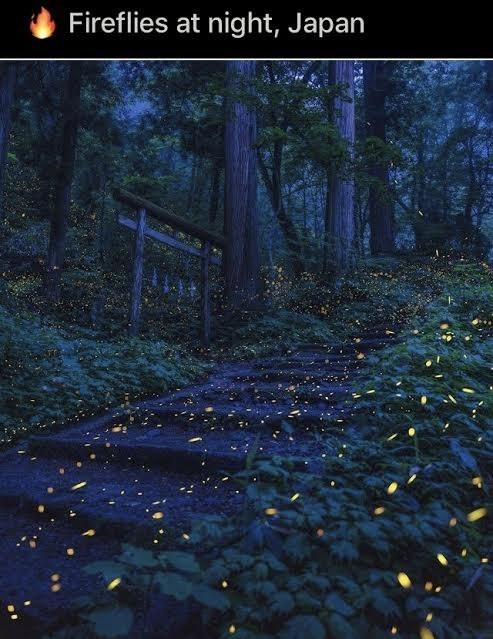 Plant - Fireflies at night, Japan