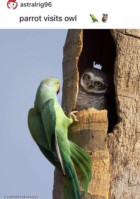 Plant - astralrig96 parrot visits owl O UDDISH NARAYANAN