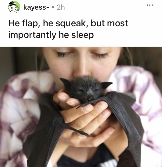 Hand - kayess- • 2h He flap, he squeak, but most importantly he sleep