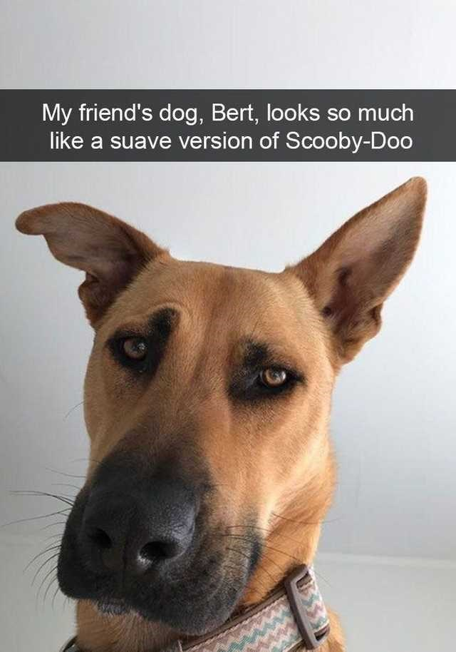 Dog - My friend's dog, Bert, looks so much like a suave version of Scooby-Doo