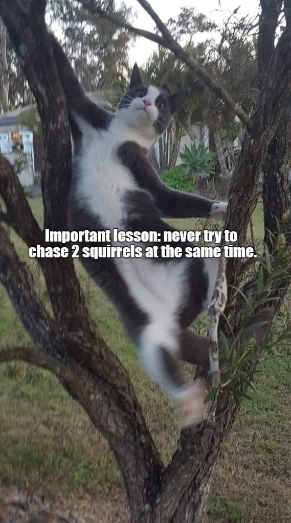 cat memes - 9596408064