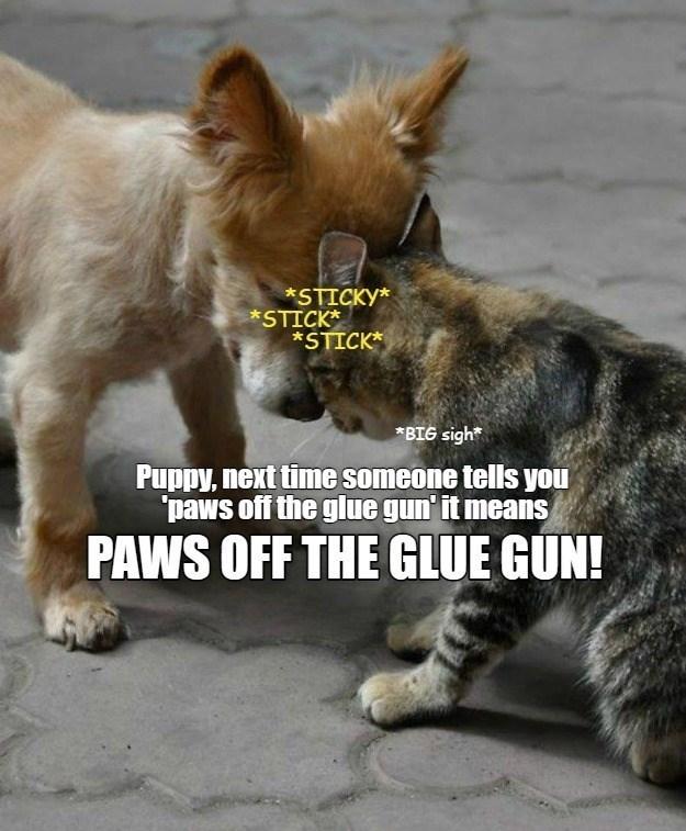dog memes cat memes - 9596409088