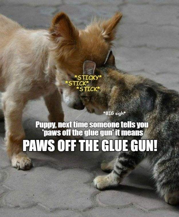 sticky stick stick Puppy, next time someone tells you paws off the glue gun it means PAWS OFF GUN! | funny pic of a puppy dog and a cat with their foreheads touching