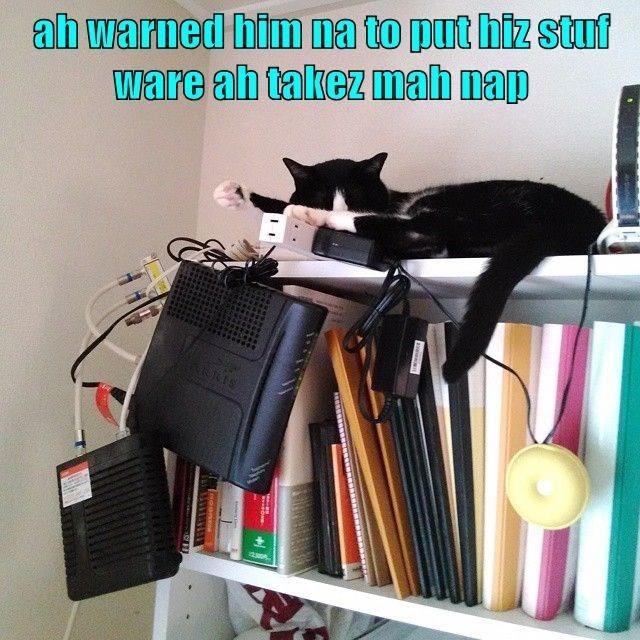 cat memes - 9596409856