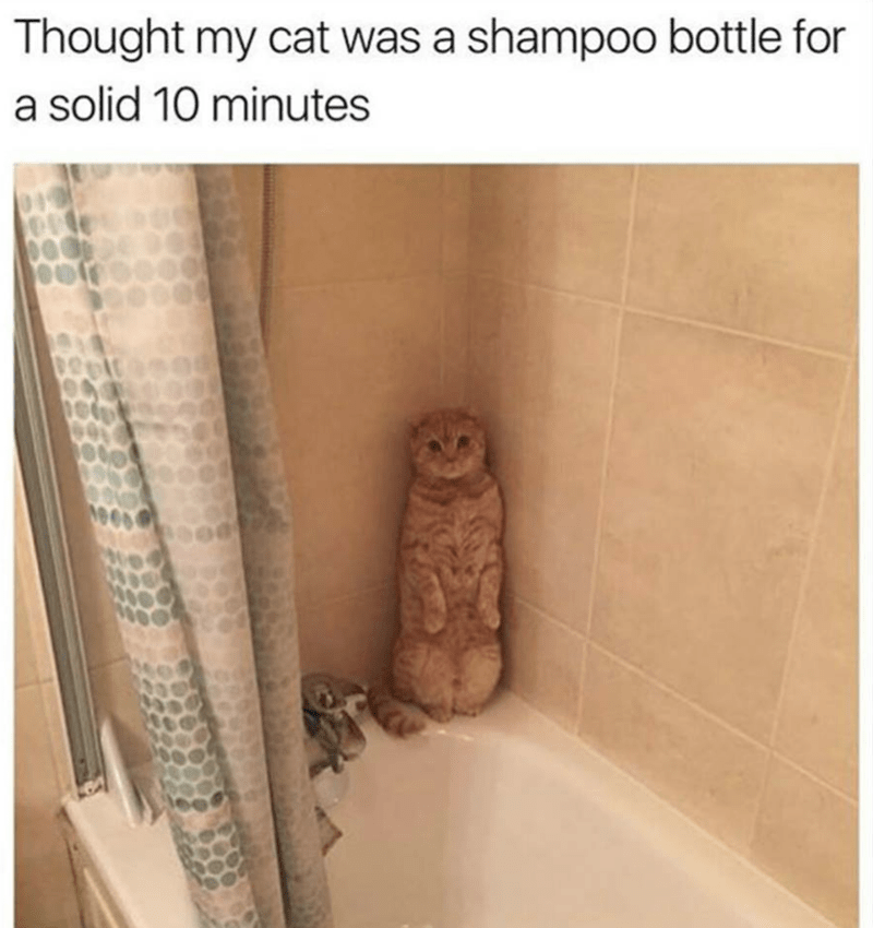 Brown - Thought my cat was a shampoo bottle for a solid 10 minutes