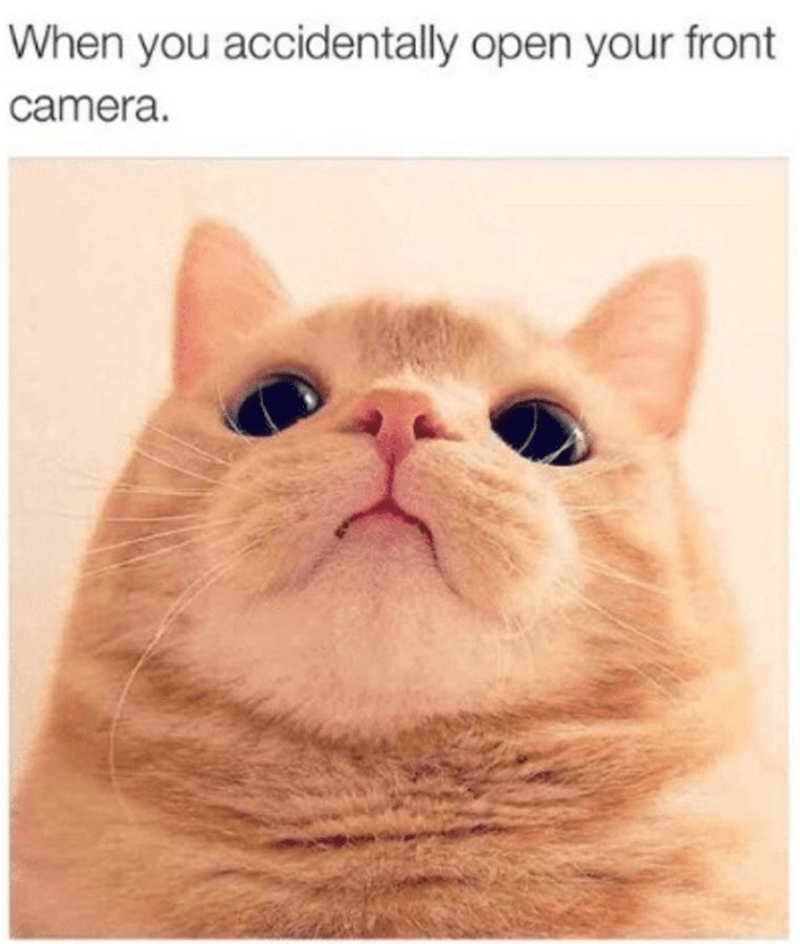 Cat - When you accidentally open your front camera.
