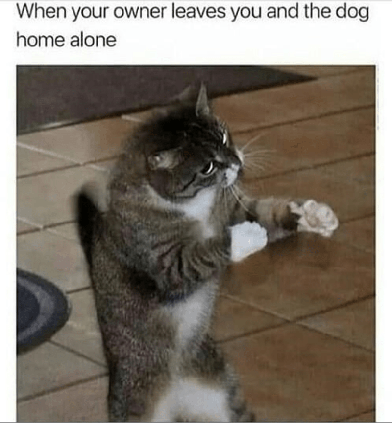 Cat - When your owner leaves you and the dog home alone