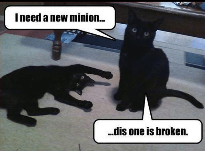 Cat - Ineed a new minion. .dis one is broken.