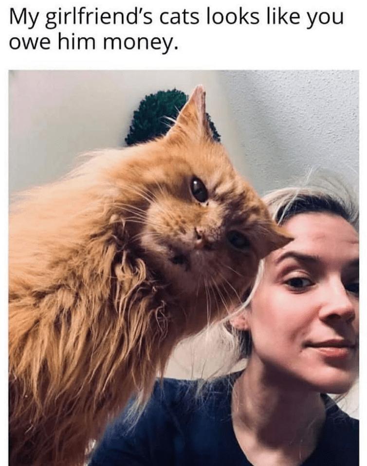 Cat - My girlfriend's cats looks like you owe him money.