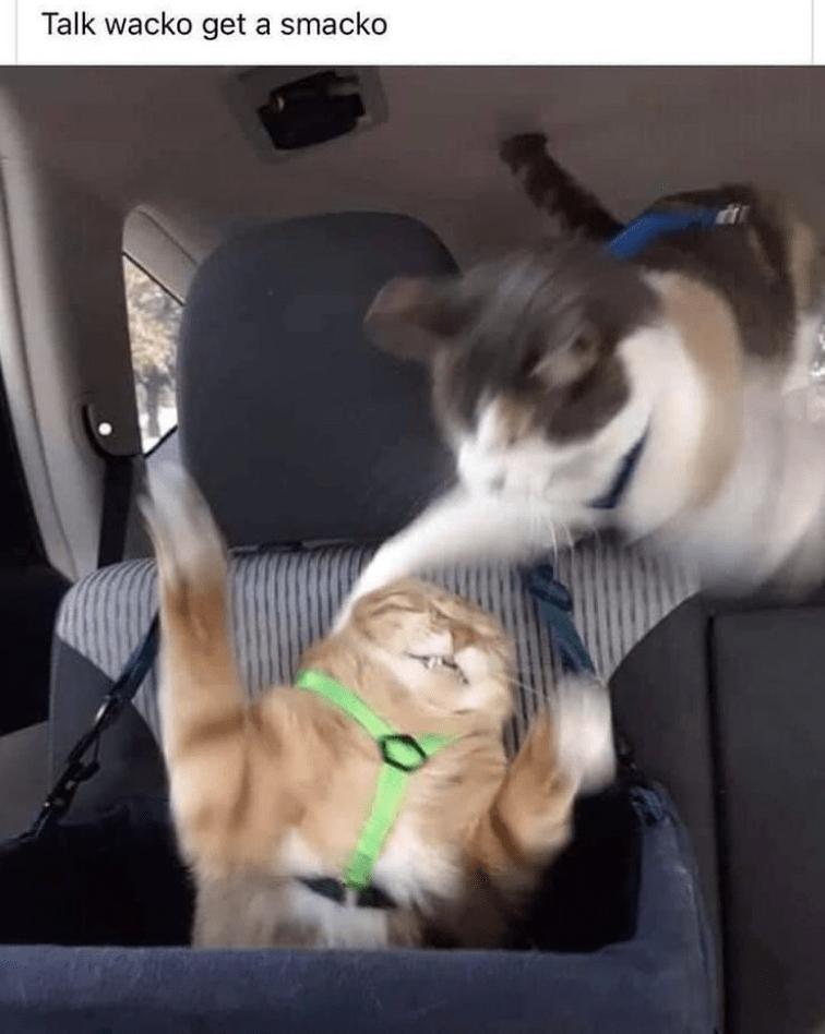 Cat - Talk wacko get a smacko AT