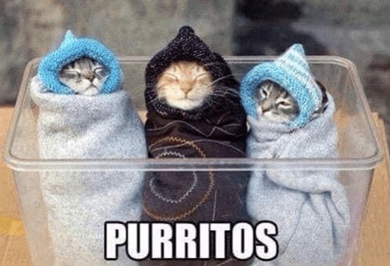 Cat - PURRITOS