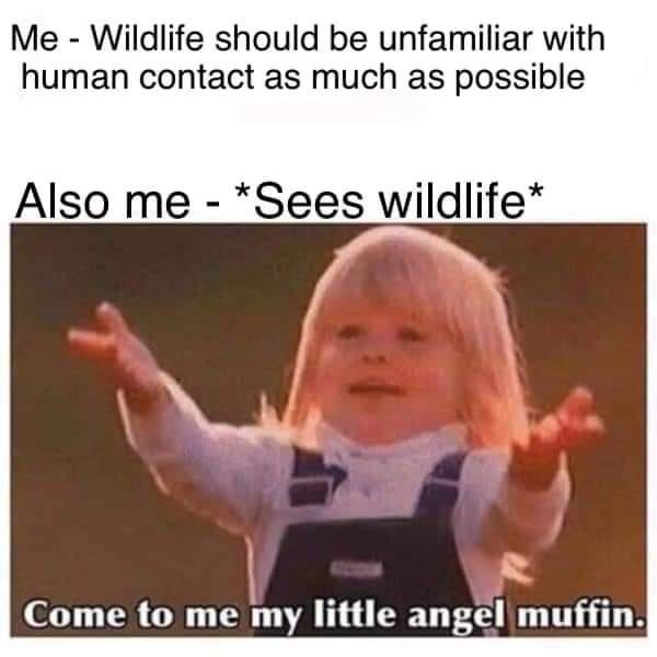 Smile - Me - Wildlife should be unfamiliar with human contact as much as possible Also me - *Sees wildlife* Come to me my little angel muffin.