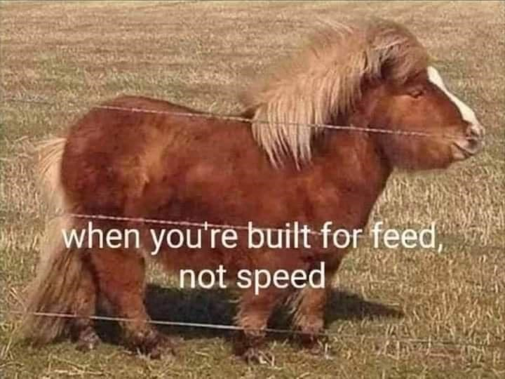 Working animal - when you're built for feed, not speed
