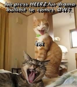 just press here for drama bullshit to come out | funny pic of an orange cat laughing evilly behind another cat screaming