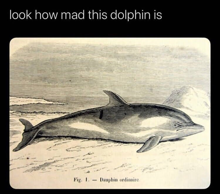 Fin - look how mad this dolphin is Fig. 1. Dauphin ordinaire.