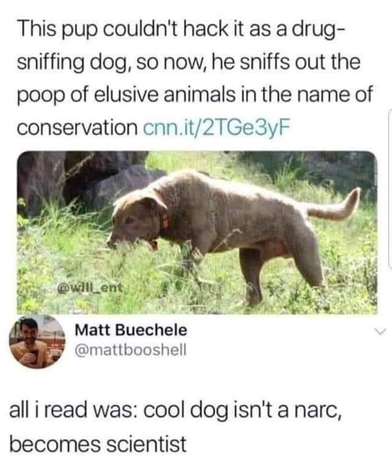 Dog - This pup couldn't hack it as a drug- sniffing dog, so now, he sniffs out the poop of elusive animals in the name of conservation cnn.it/2TGE3YF @will_ent) Matt Buechele @mattbooshell all i read was: cool dog isn't a narc, becomes scientist