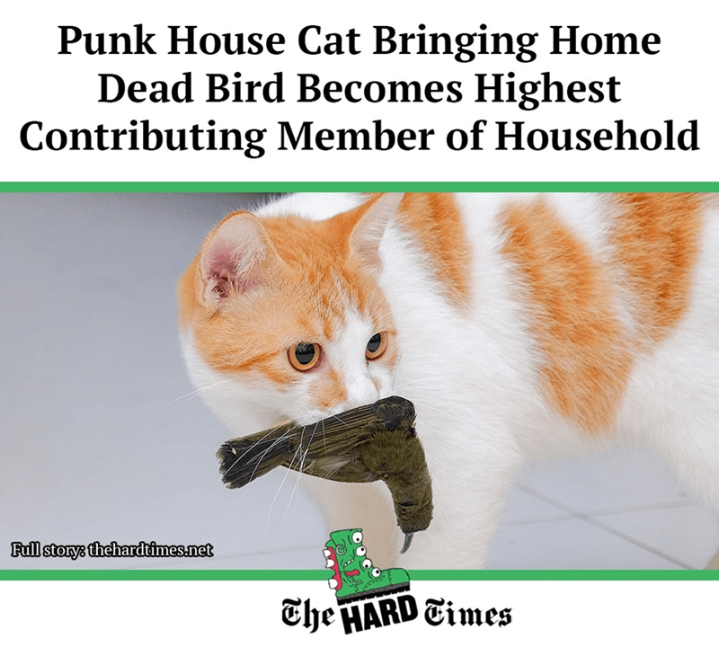 Cat - Punk House Cat Bringing Home Dead Bird Becomes Highest Contributing Member of Household Full storys thehardtimes.net The HARD Times