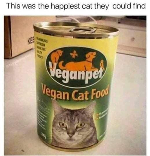 Cat - This was the happiest cat they could find KEE Veganpet Vegan Cat Food WA