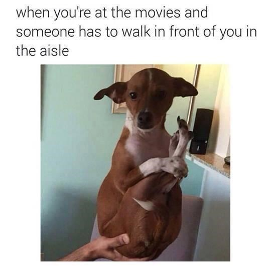 Dog - when you're at the movies and someone has to walk in front of you in the aisle