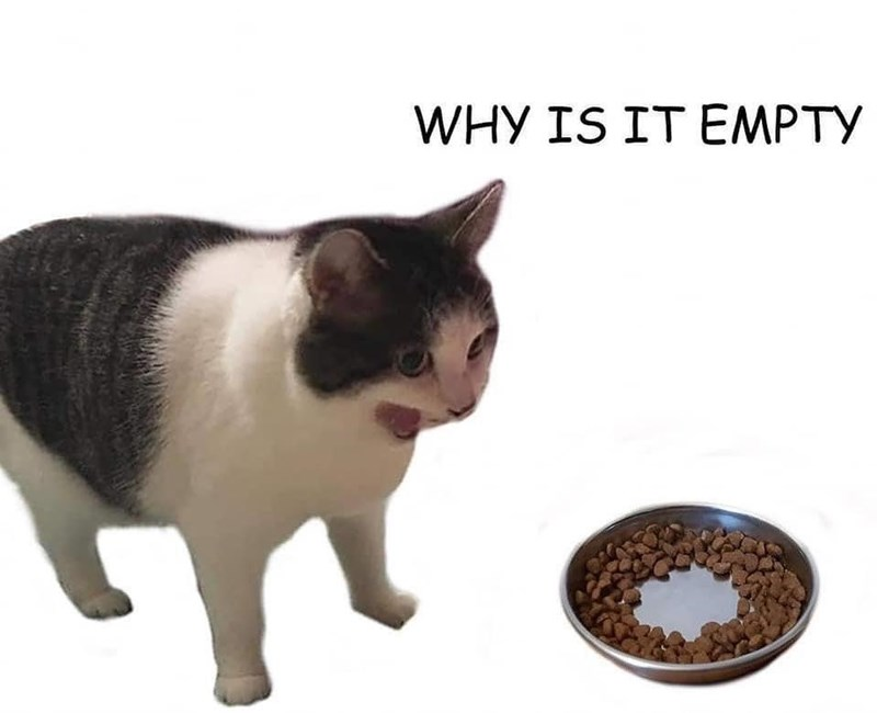 Cat - WHY IS IT EMPTY