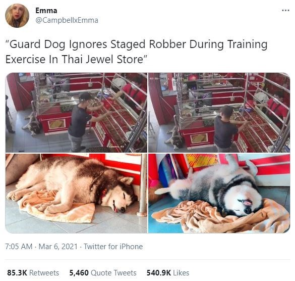 "Product - Emma @CampbellxEmma ""Guard Dog Ignores Staged Robber During Training Exercise In Thai Jewel Store"" 7:05 AM - Mar 6, 2021 - Twitter for iPhone 85.3K Retweets 5,460 Quote Tweets 540.9K Likes"