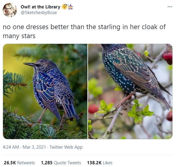Bird - Owl! at the Library @SketchesbyBoze no one dresses better than the starling in her cloak of many stars 4:24 AM - Mar 3, 2021 - Twitter Web App 26.5K Retweets 1,285 Quote Tweets 138.2K Likes