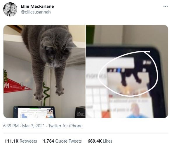 Cat - Ellie MacFarlane @elliesusannah nom MOOR HEAD 6:39 PM - Mar 3, 2021 - Twitter for iPhone 111.1K Retweets 1,764 Quote Tweets 669.4K Likes