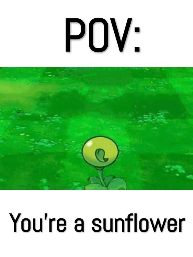 Plant - POV: You're a sunflower