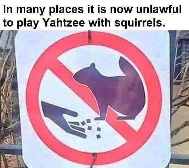 funny memes, stupid memes, memes | many places it is now unlawful to play Yahtzee with squirrels.